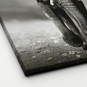 Keilrahmenbild Grey Elephant - Weiß/Grau, Basics, Holzwerkstoff (40/40/2cm)