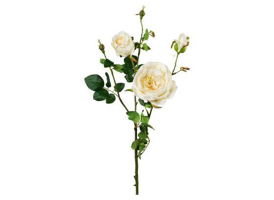 Rose Elke Creme - Creme/Grün, Natur, Kunststoff (63cm)