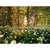 Keilrahmenbild Sweet Woodruff 116x84cm - Multicolor, MODERN, Holz (84/116cm)