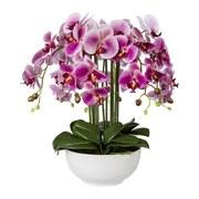 Kunstblume Orchidee H: 54 cm Magenta - Magenta/Grün, Trend, Kunststoff (54cm) - MID.YOU